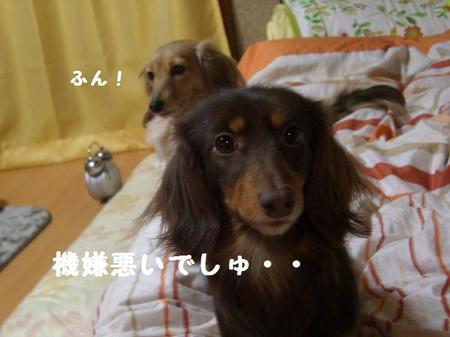 6a95746f.JPG