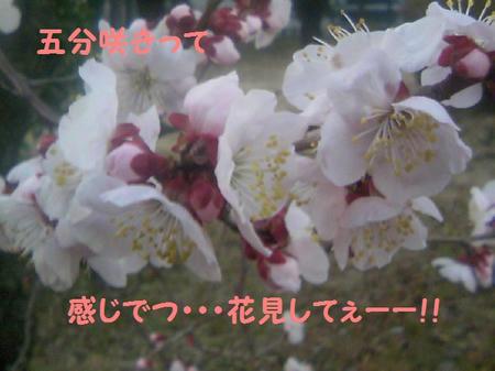 TS3C0111.JPG