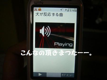CIMG2963.JPG