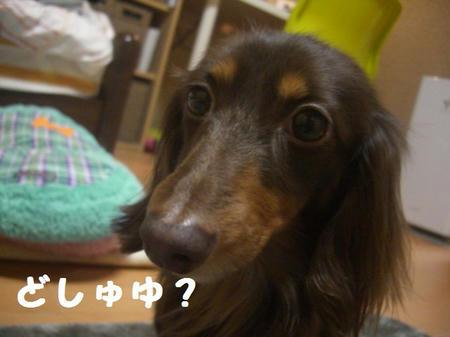 CIMG4263.JPG