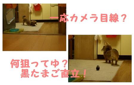 CIMG5193.JPG