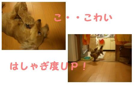 CIMG5196.JPG