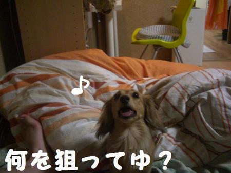 CIMG5936.JPG