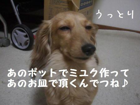 CIMG7489.JPG
