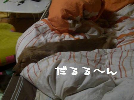 CIMG7696.JPG