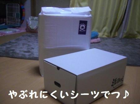 CIMG0262.JPG