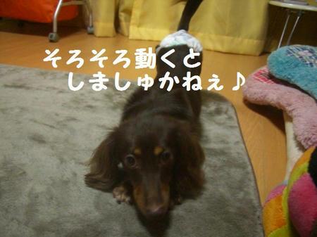 CIMG2908.JPG