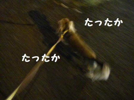 CIMG3740.JPG