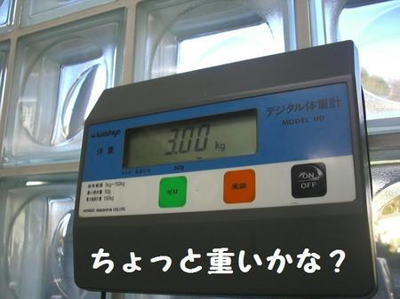 fa9760c6.JPG
