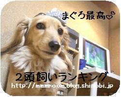 CIMG2429.JPG