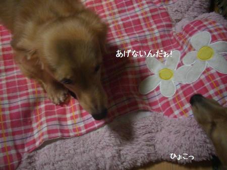 CIMG7059.JPG