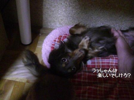 CIMG7746.JPG