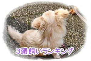 IMG_8235.jpg