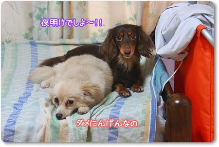 IMG_7676.jpg