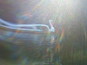 白鳥ボートでワープ.jpg