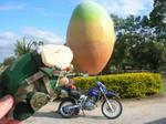 big_mango01.jpg
