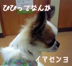 20081113a.jpg