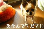 IMG_3688a.JPG