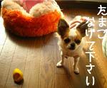 IMG_3691a.JPG