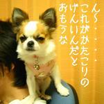 IMG_3764.JPG