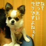 IMG_3765.JPG