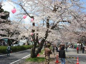 桜,お花見,桜とSL,主婦の日常,