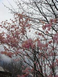 GW旅行,栃木県,ゴールデンウィーク,男体山,中禅寺湖,日光,華厳の滝,ヤシオツツジ