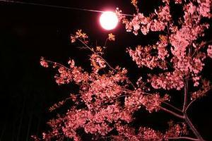 大井川鉄道,桜,写真,静岡おでかけ,花見スポット,おすすめ,キャノン,イオス,キスX3,canon EOS kissX3