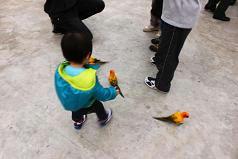 掛川花鳥園,子連れお出かけスポット,雨でも大丈夫,感想,レビュー,口コミ