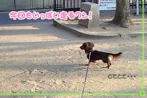 yotsuba_sanpo1.jpg