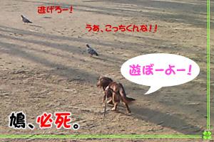 yotsuba_sanpo2.jpg