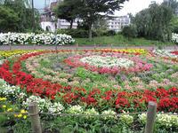 蘆花公園花の丘