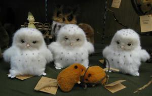 3羽のフクロウの雛たち