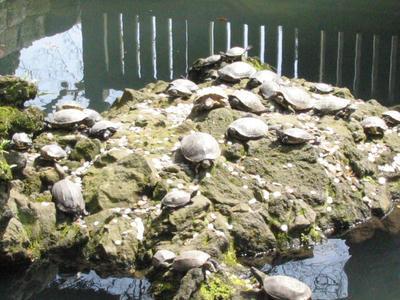 成田山山門近の池