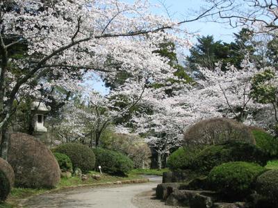 成田山新勝寺公園の桜