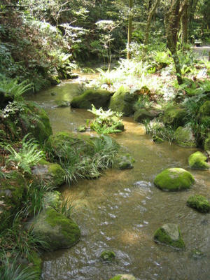成田山公園で森林浴