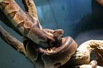 ヘビ蛇ヘビ^^