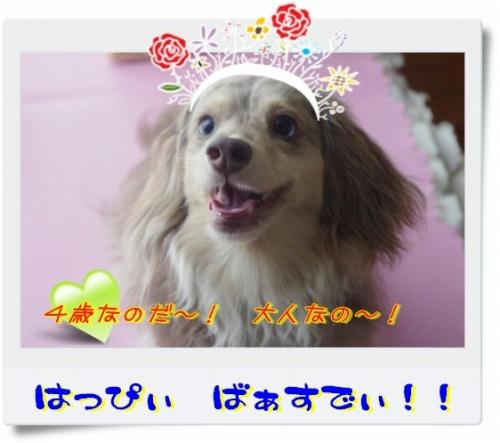 s-s-IMGP6451.jpg