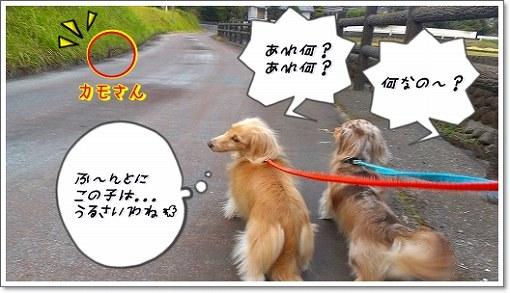 s-s-IMAG0389.jpg
