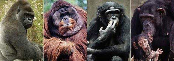 三字熟語(sanjijukugo) 類人猿