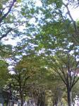 071103-morinomiyako-2.jpeg