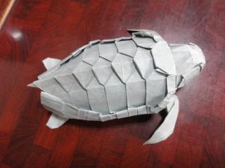 アカウミガメの画像 p1_10