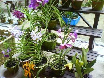 botanic02033.JPG