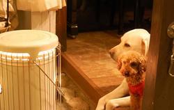 寒がりな犬たち