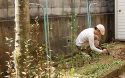 トマト苗定植中