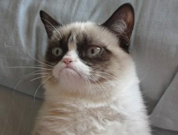 Grumpy-Cat.jpg