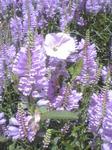 紫色の花たち