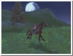 horse_3.jpg