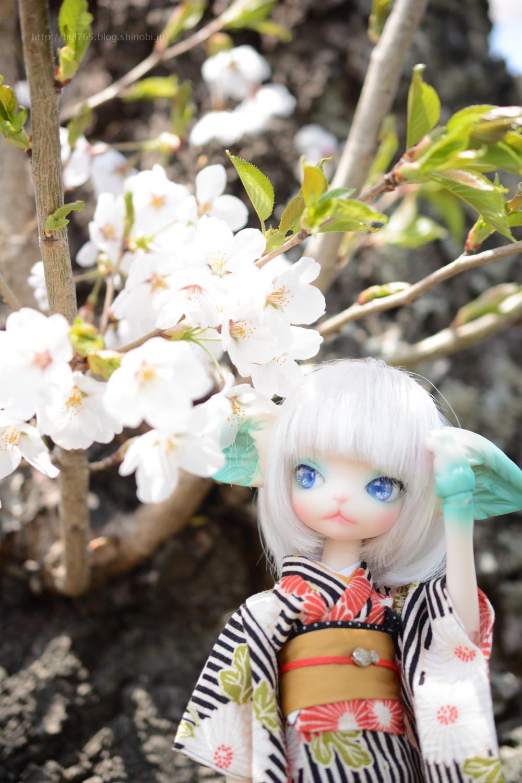 桜とミスキティ