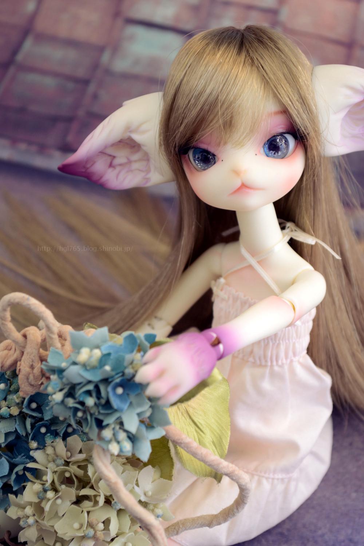 紫陽花ミスキティ